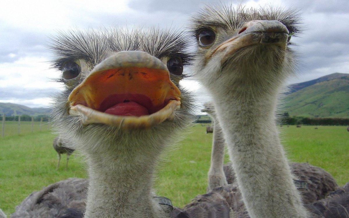Картинки приколы страус, анимации дорога