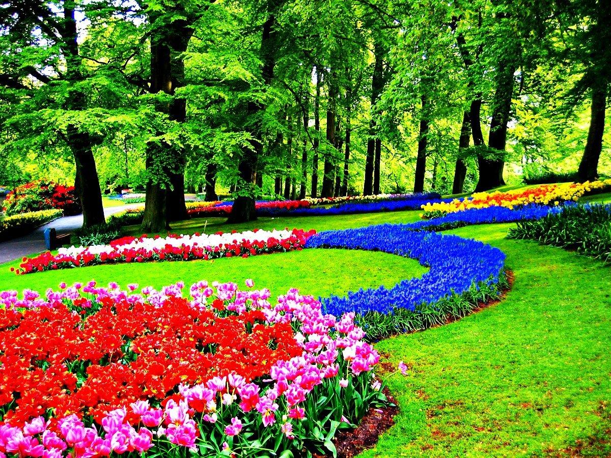 предлагаем картинки цветы сады клумбы поделиться вами