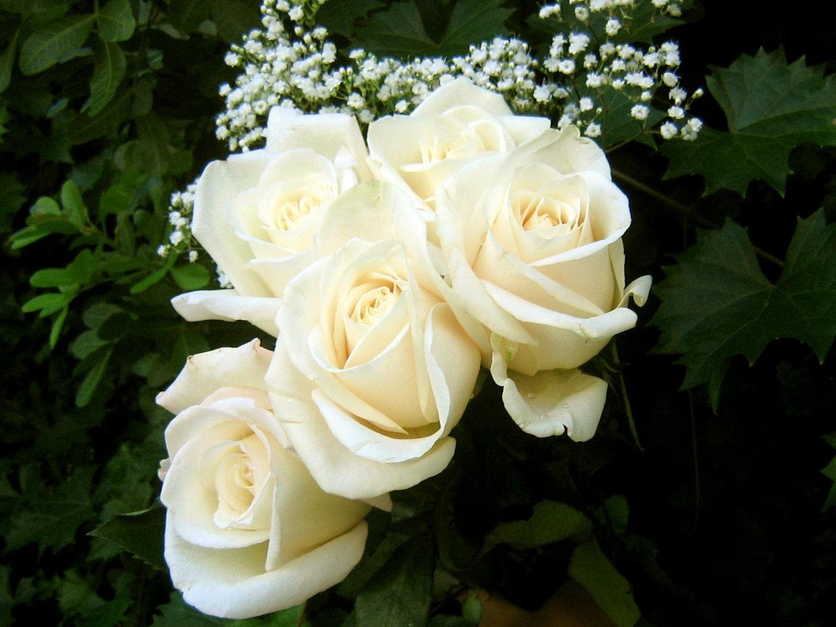 Вьющиеся домашние цветы фото с названиями тех