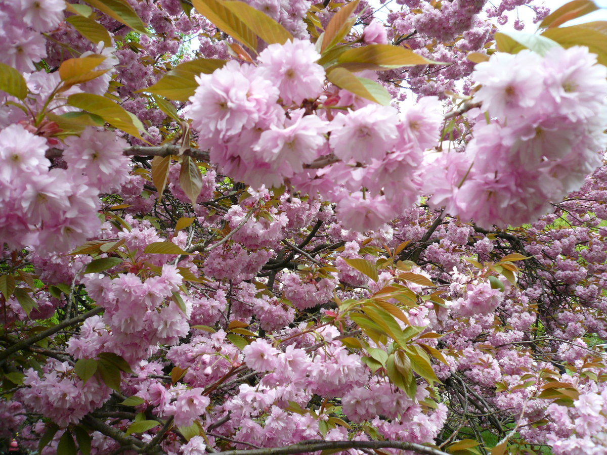 Картинки времена года весна
