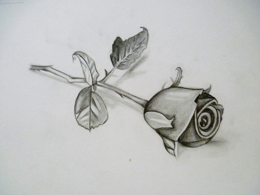 Розы на открытку карандашом, символ 2019 года