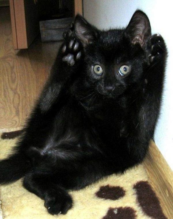 Летию кубани, картинки про черных кошек смешные