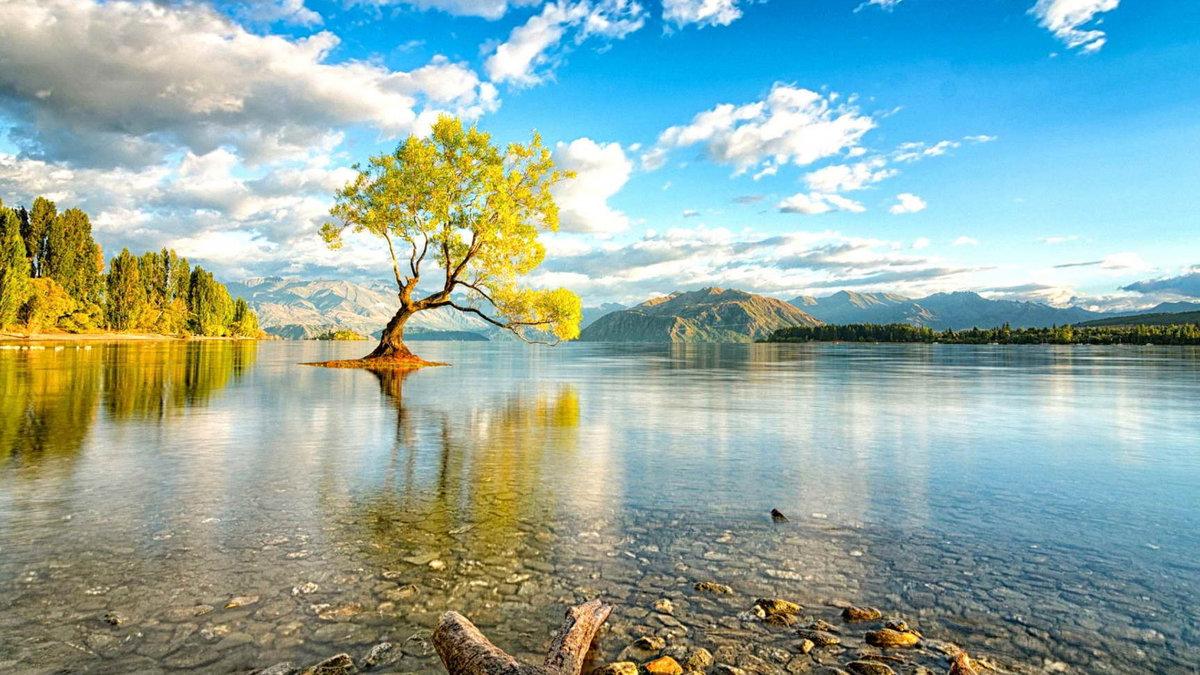 авторитета берегите озера картинки чешуйчатые, поэтому выглядят