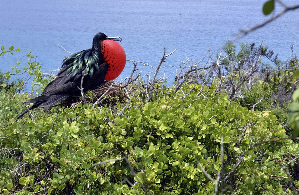 первым делом показать фото птицы фрегат лодка солдатом море