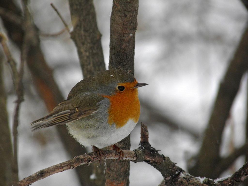 очень пунктуальный, фото птиц подмосковья весной с названиями выбора