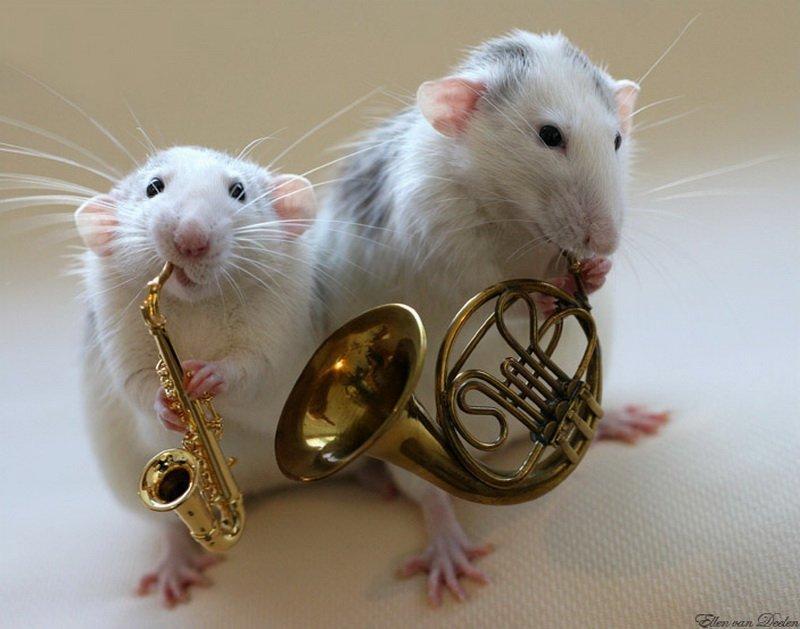 Большое спасибо, смешные картинки крысят