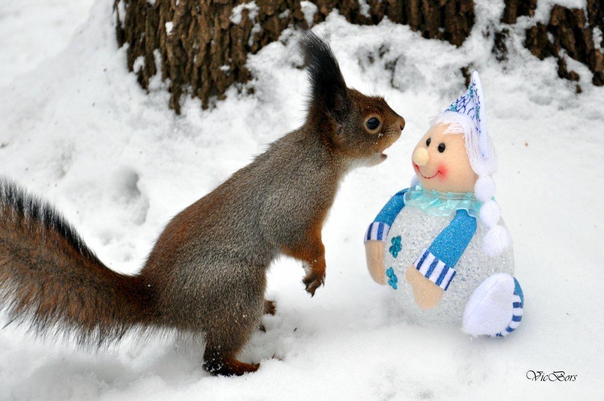 Для, зимние смешные картинки с животными