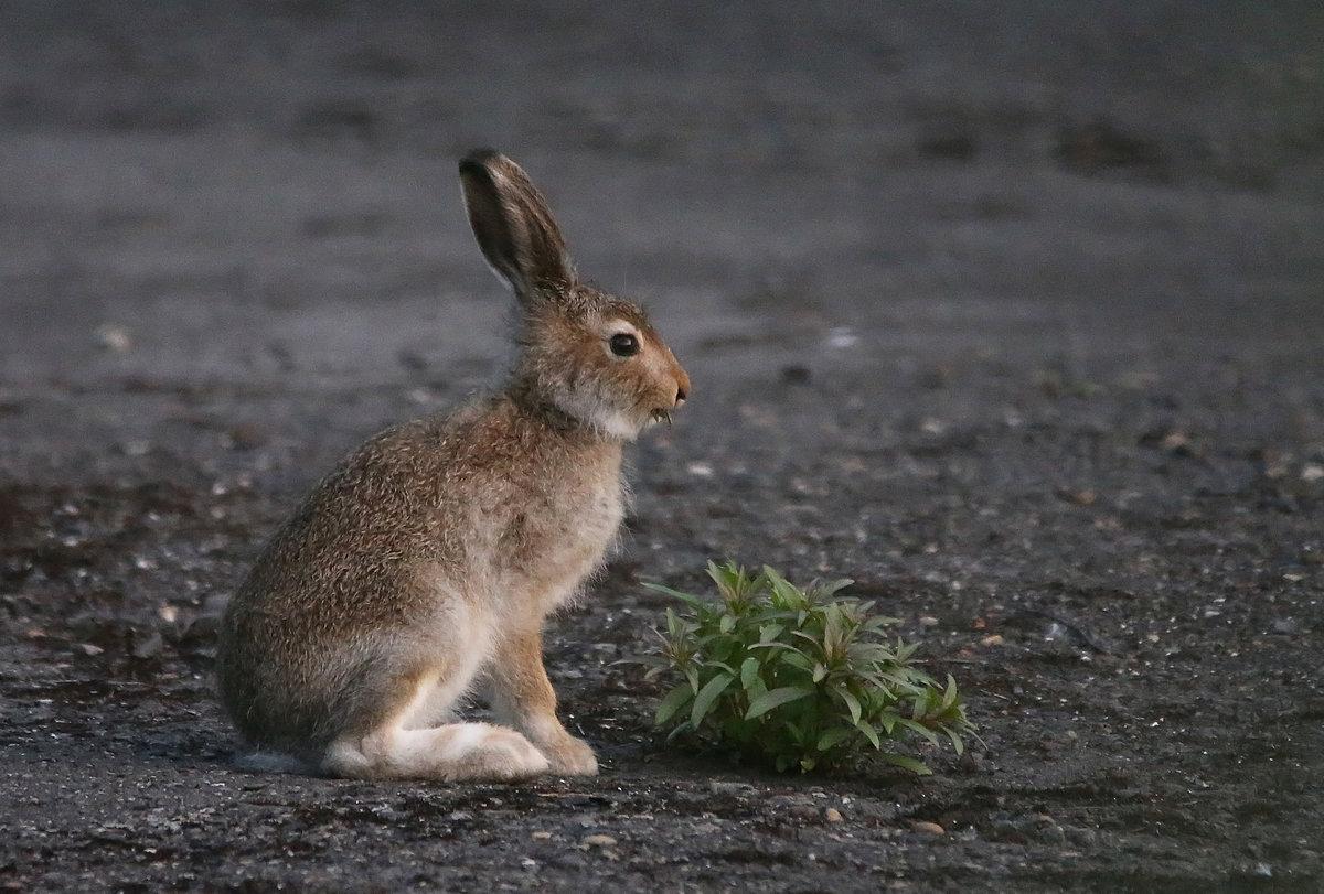Картинка детеныша зайца
