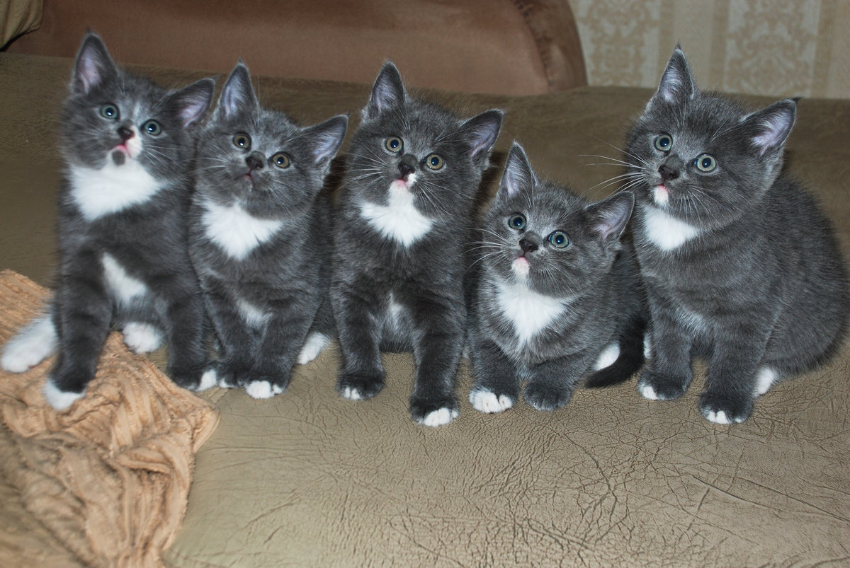Дню шефа, картинки кошек и котят с надписями