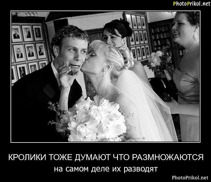 Поздравление, картинки приколы не хочу жениться