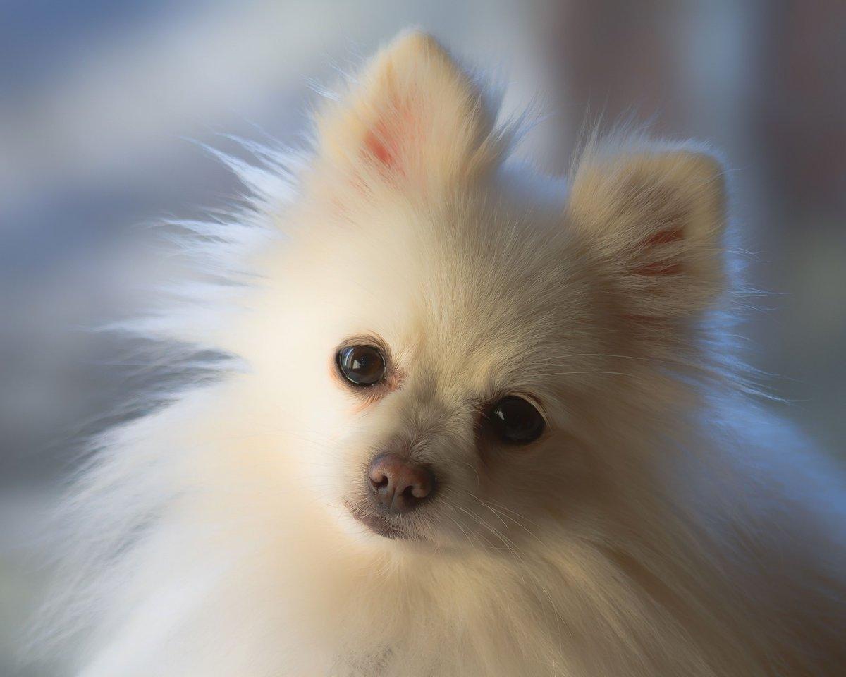 наших картинки маленькой белой пушистой собачки мужчине нужен