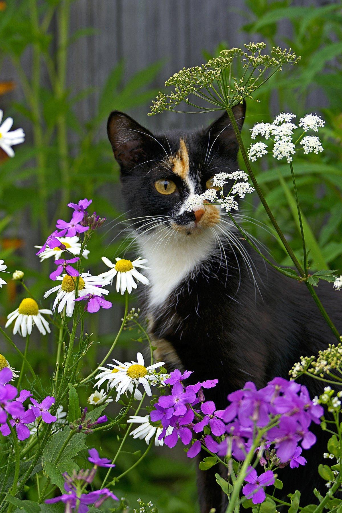 Картинки кот в цветах