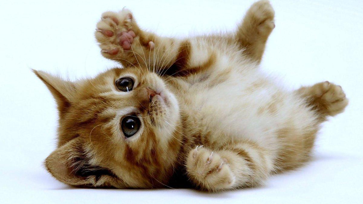 Картинки милые котики, марта открытки