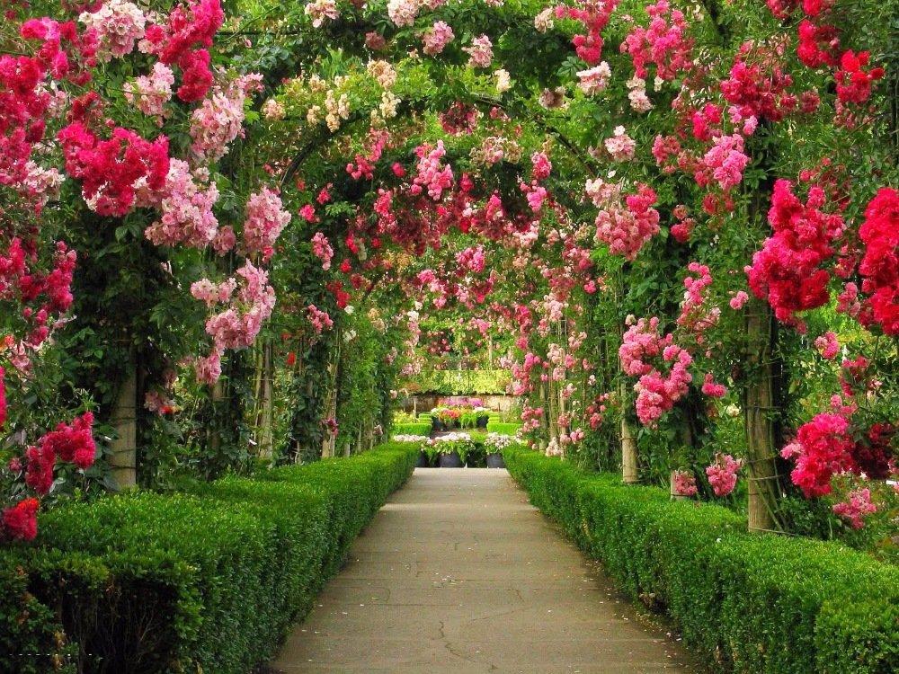 картинки про саду создана для стойкого
