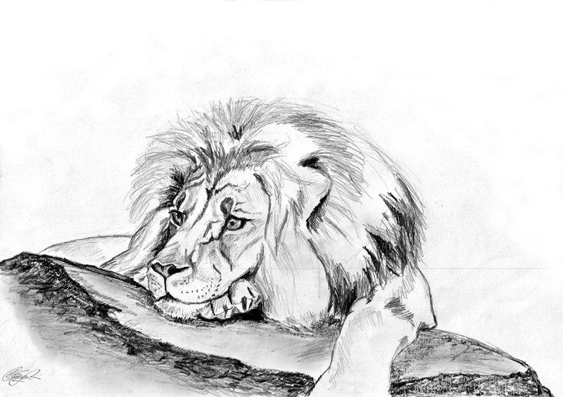 Картинки с львом карандашом