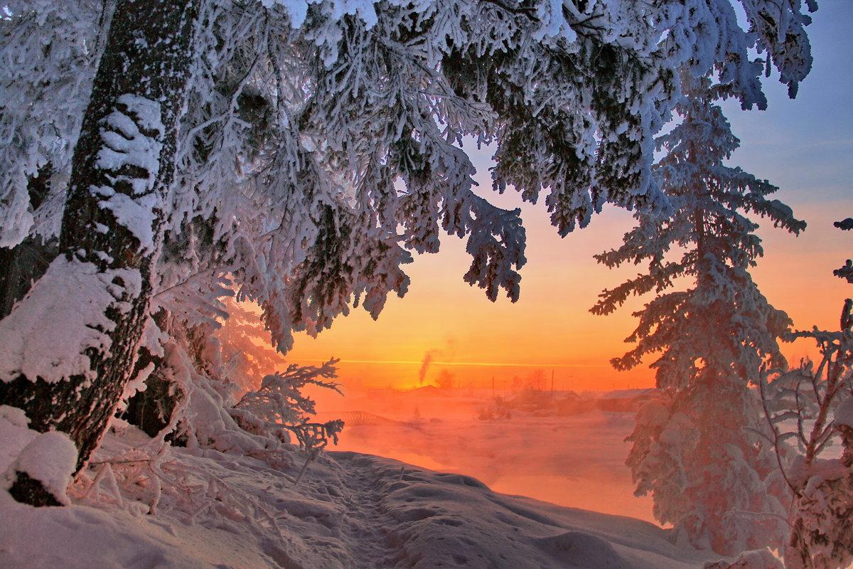 фотографии о красоте зимы приветствуется натуральное дерево