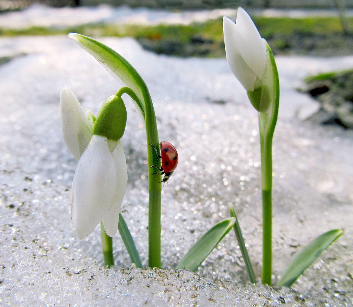 Красивые открытки про весну фото