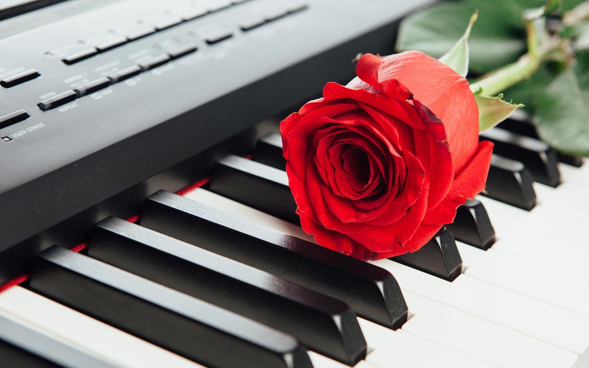 картинка роза и пианино как