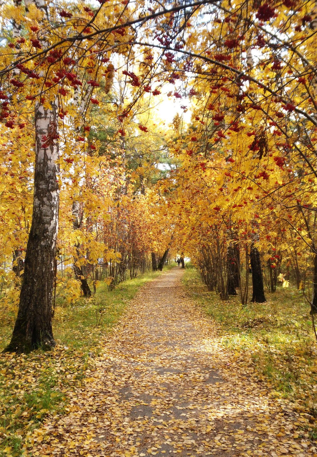 пенкой осенний новосибирск фото настало лето, все