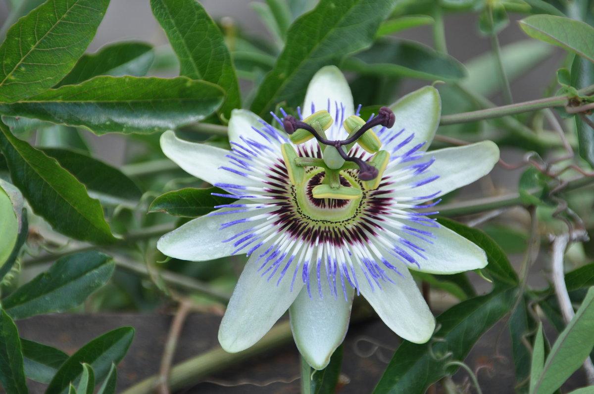 Цветы абхазии фото с названием том