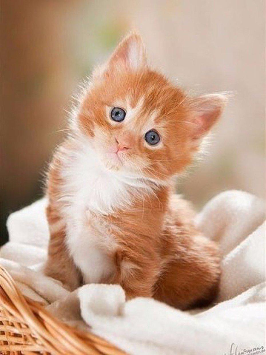 Картинки рыжие котята, открытки