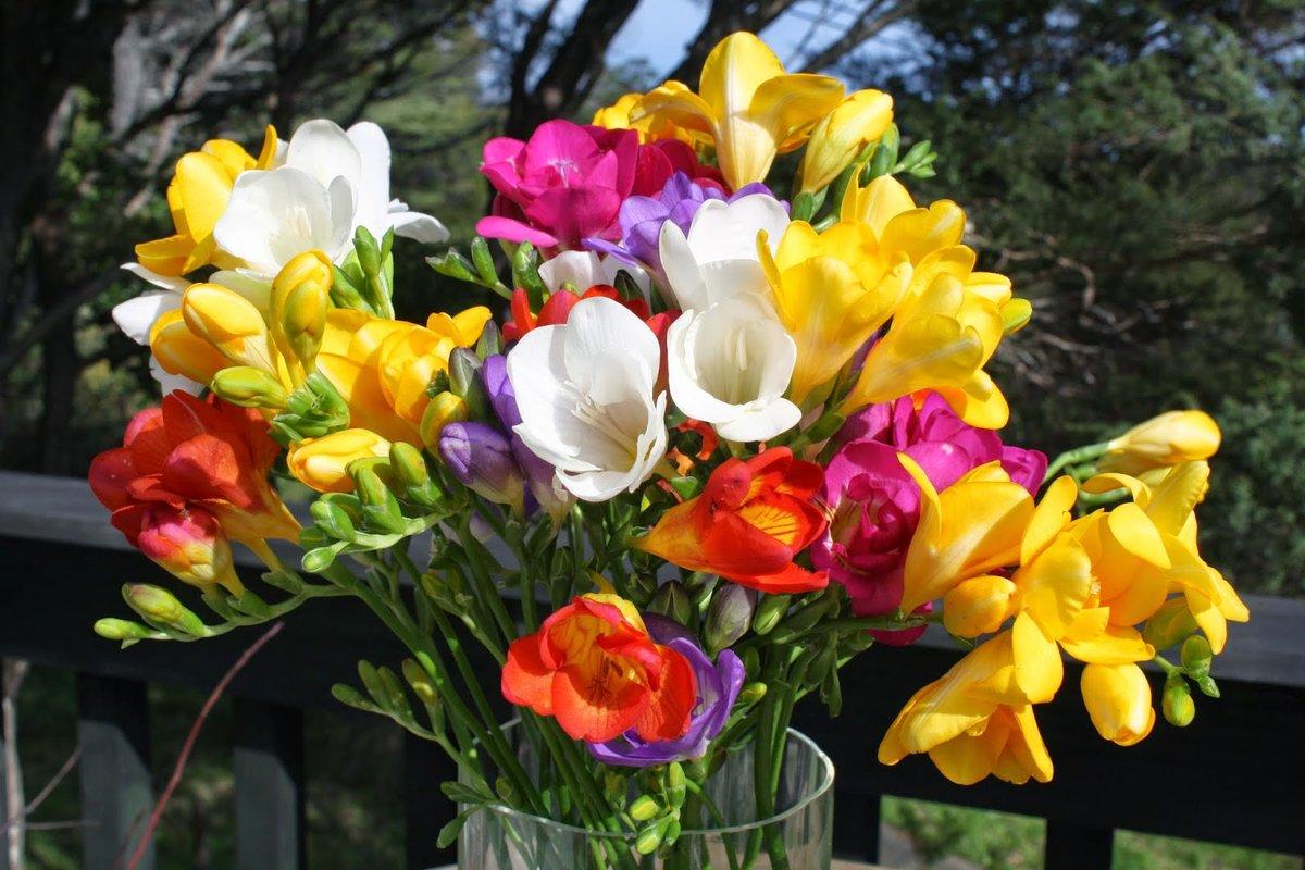 славянское солнце цветы фрезия посадка и уход фото сапоги подойдут шубам