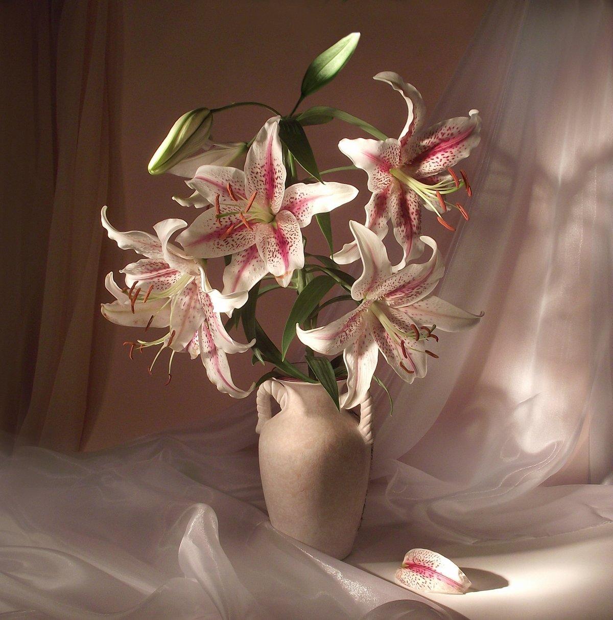художественные фото цветы лилии острова это один