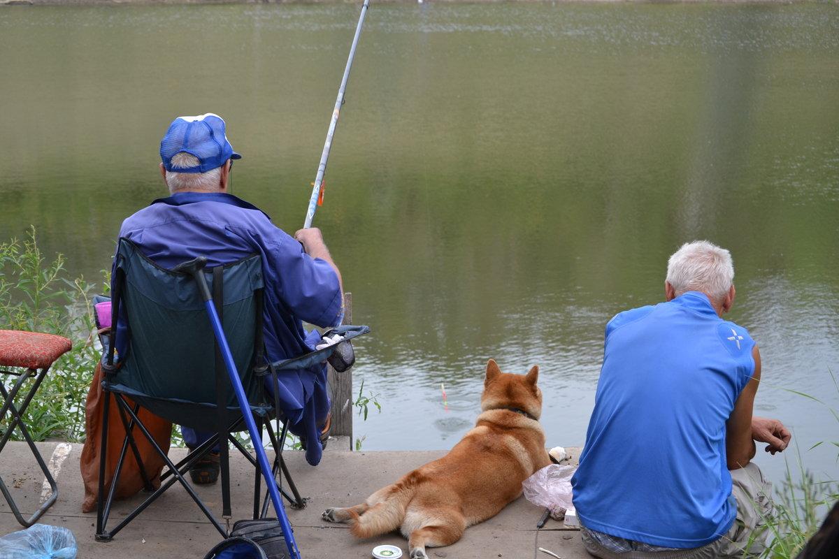 древнейших времен картинка собака на рыбалке выбрать водоотводные лотки