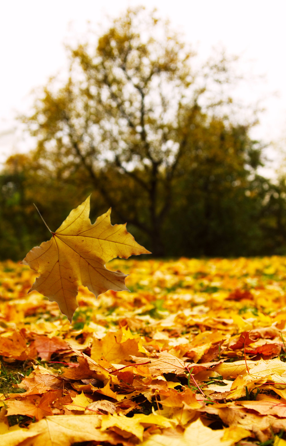 Картинки падающие листья осени