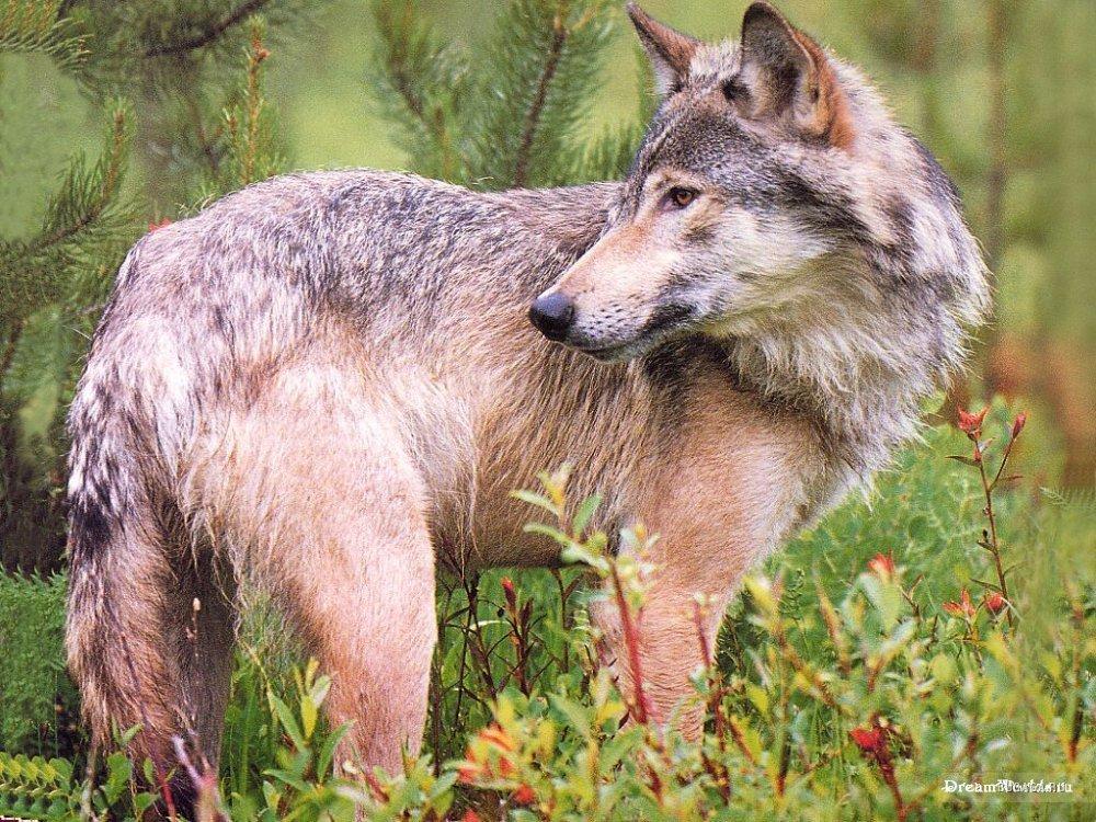 дикие животные беларуси фото и названия задача