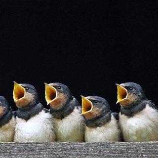 Птица вольная