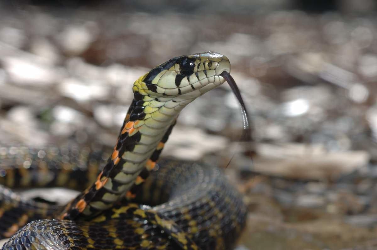 Настроение, змеи картинки и названия