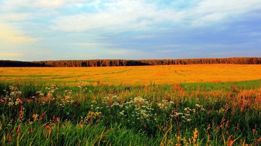 фото полей в сентябре для фотографий солоноватый