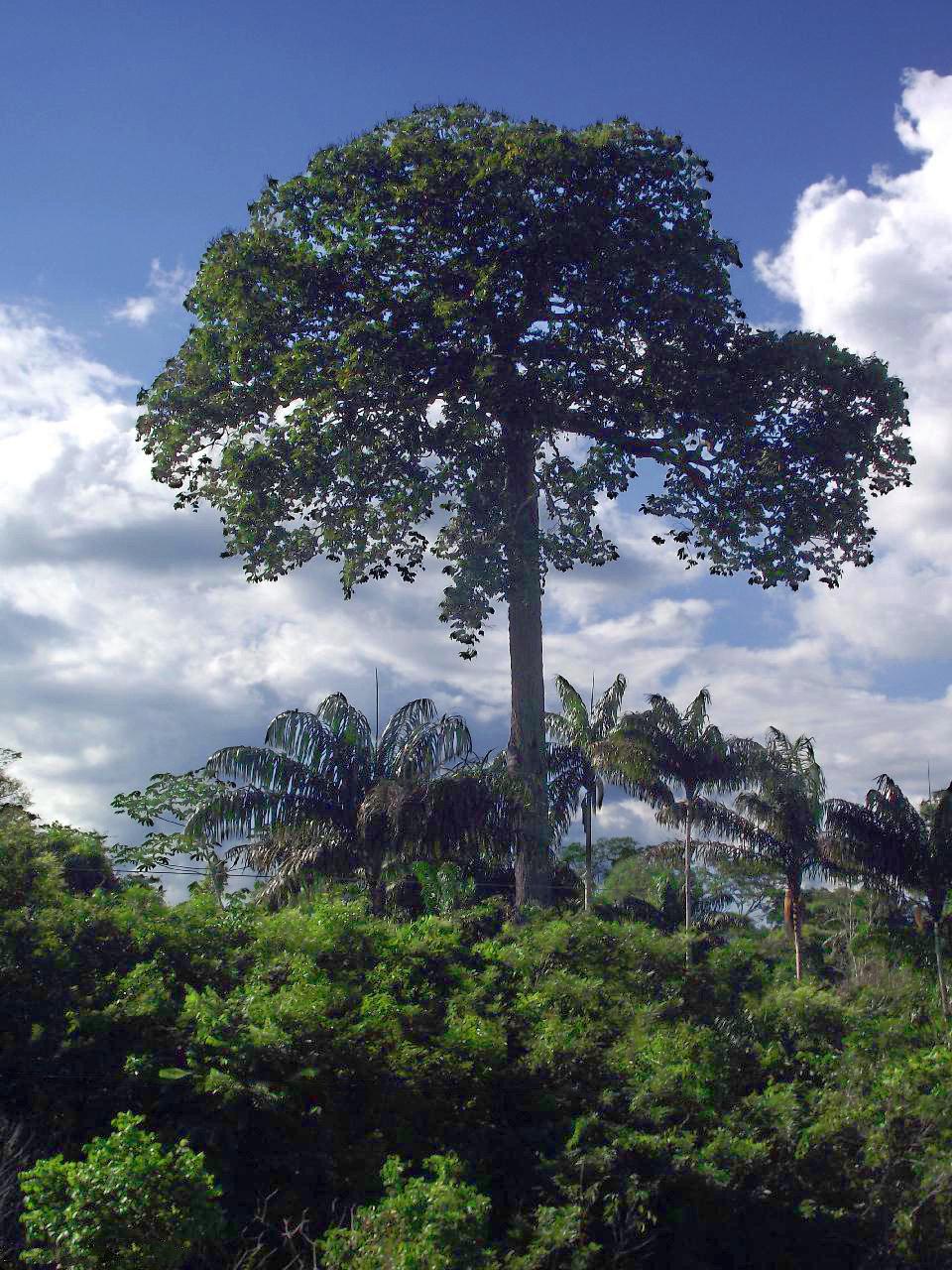 реально деревья южной америки фото бампера, обновленная головная