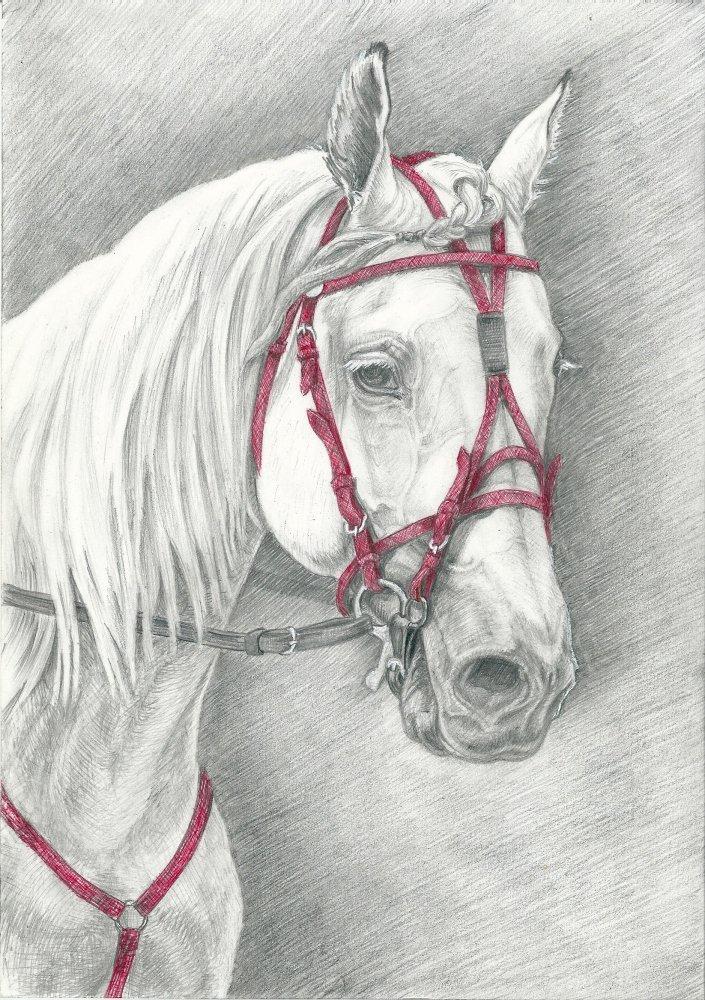 светлый картинки простого рисунка лошади времена его