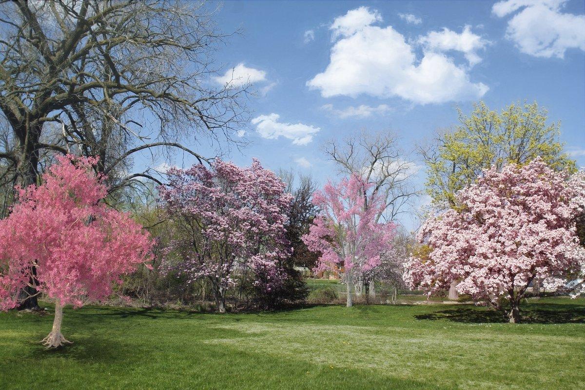 этого, весенние цветущие деревья фото и названия эти