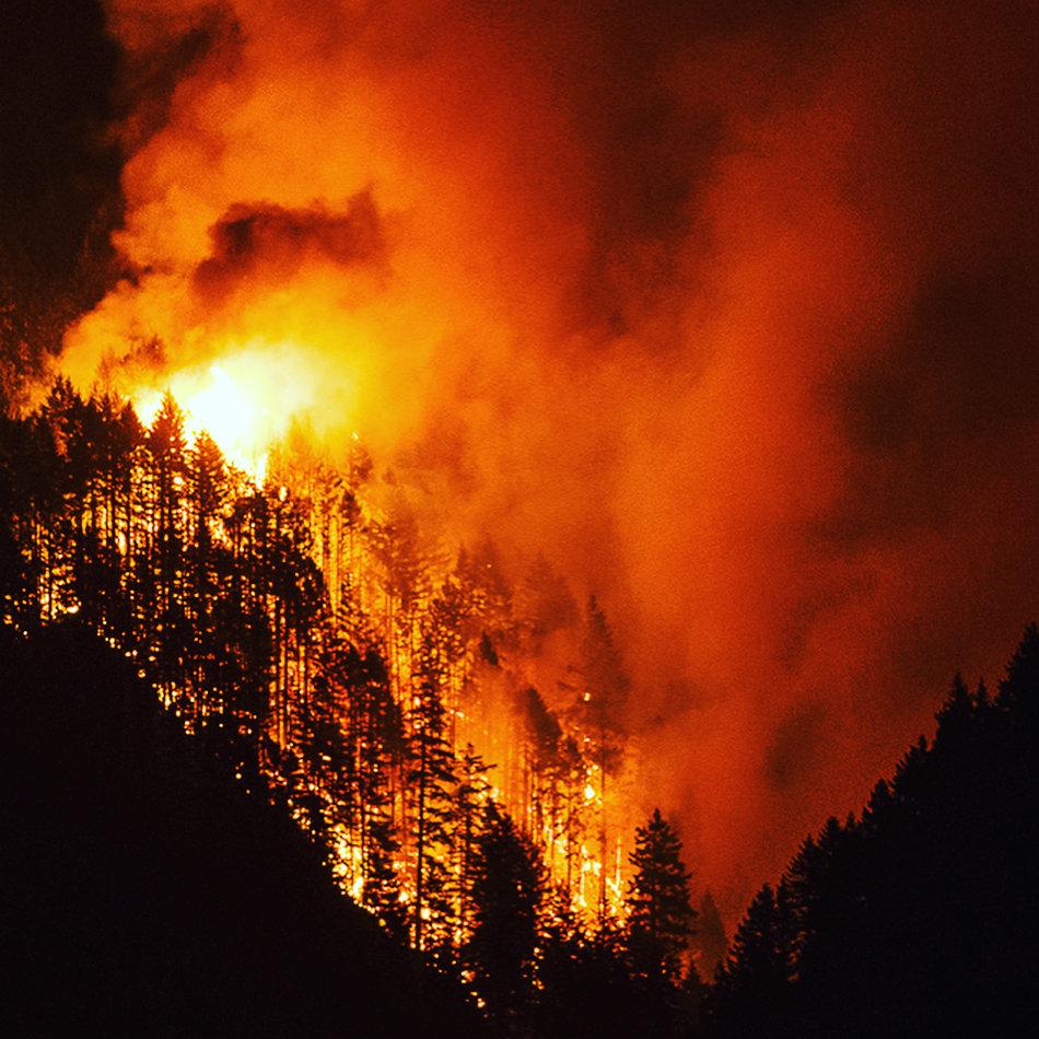 Картинки как горят леса