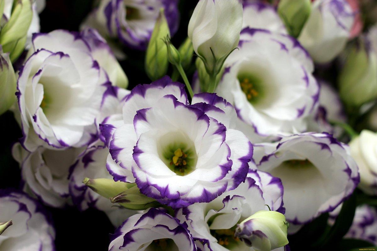 информацию внешнем цветок истома картинка пополнился