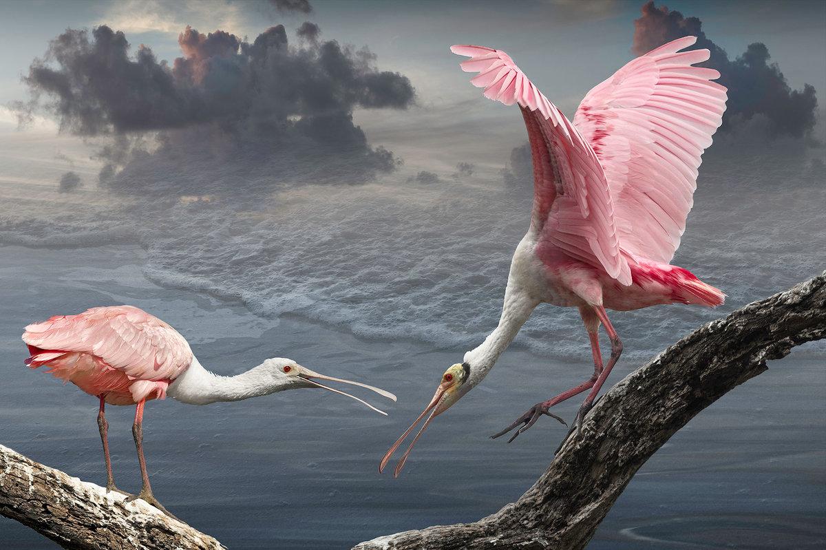 В мире птиц фото