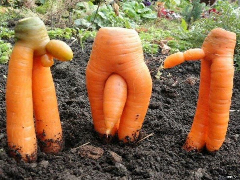Нарисовать поздравительную, картинки прикольная морковь