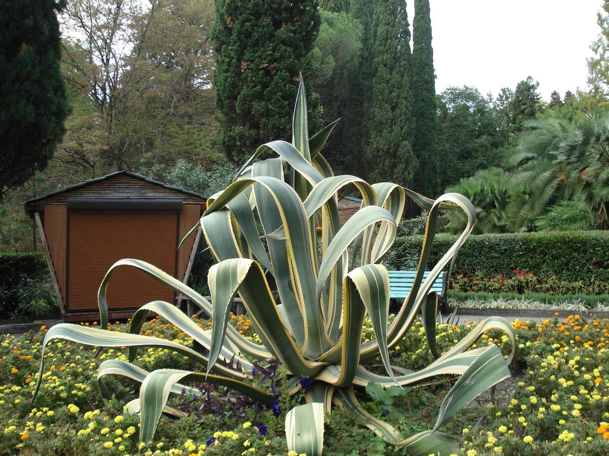 растения сочинского дендрария фото с названиями вообще
