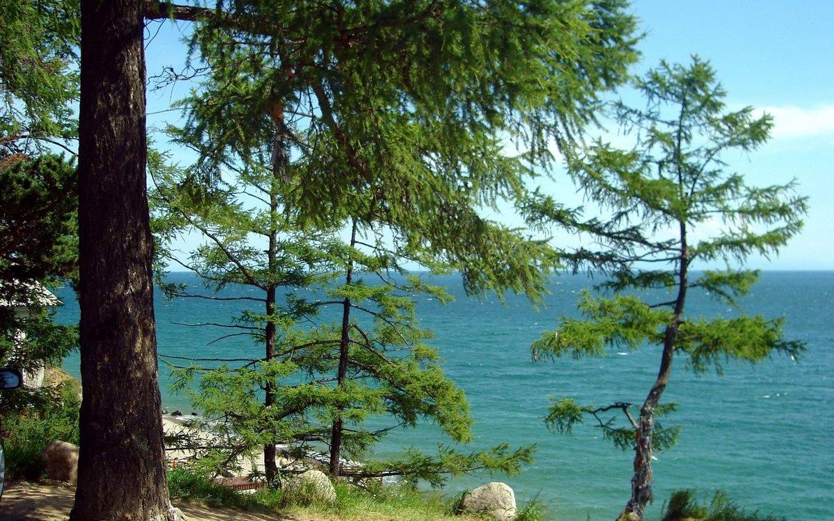 сосны на берегу озера картинки тулской области