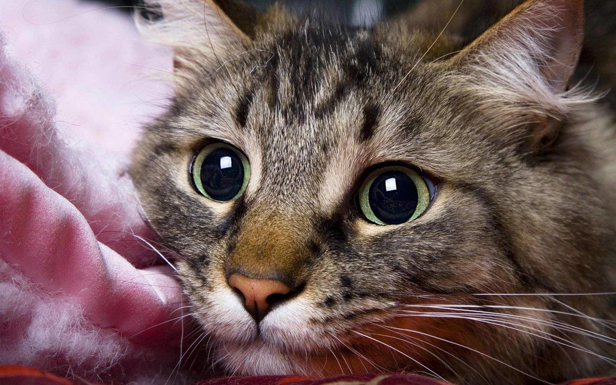 Прадедушке, картинки картинки кошек