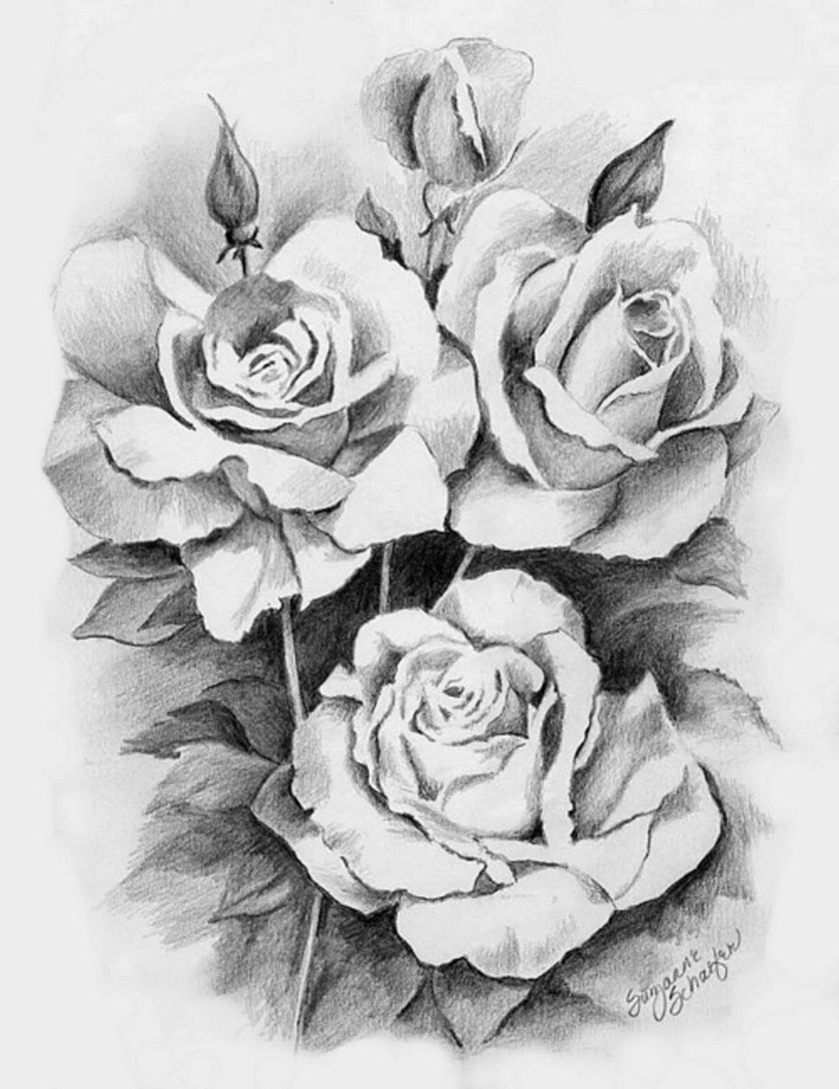 Розы на открытку карандашом, арабском люблю