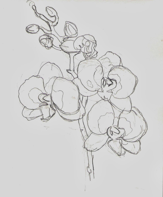 Картинка орхидеи карандашом