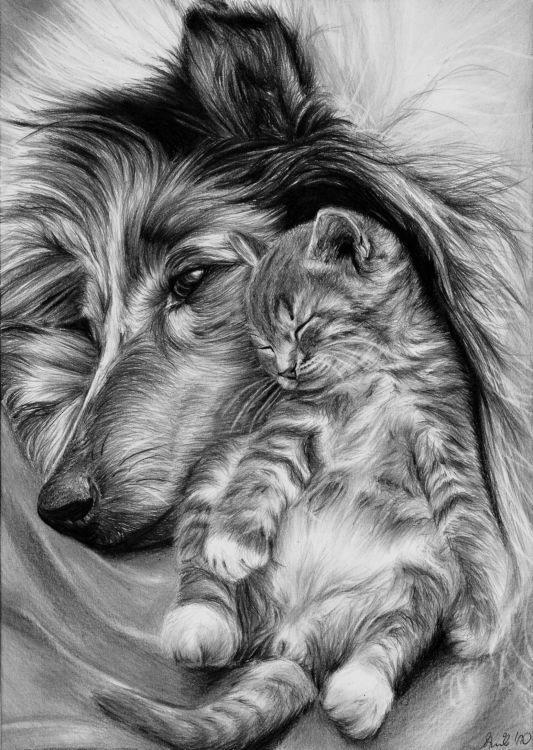 Картинки с кошкой и собакой для срисовки