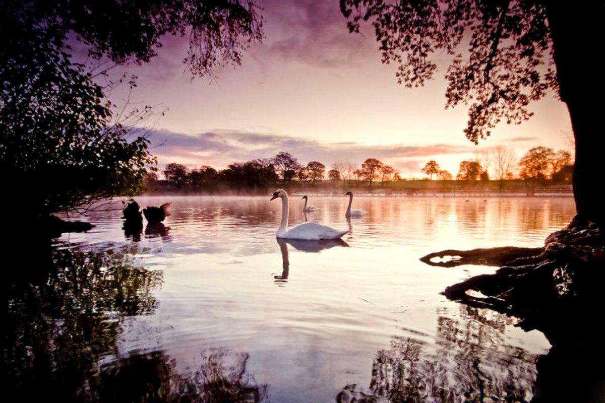 Романтичные картинки с природой