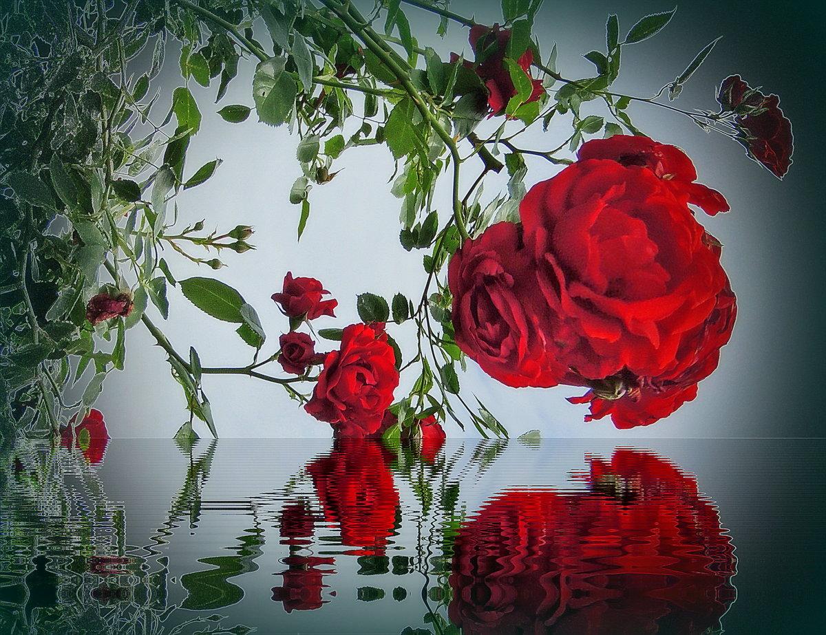 Цветы отражающиеся в воде картинки гиф