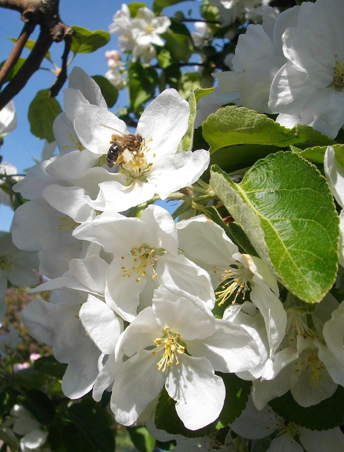 Фотографии майского цветения
