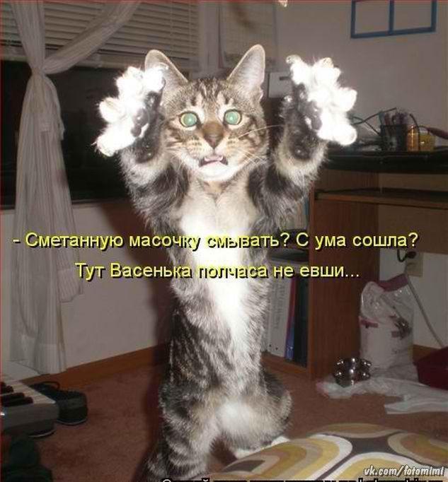 Снов, смешные картинки с надписями до слез про котов без мата